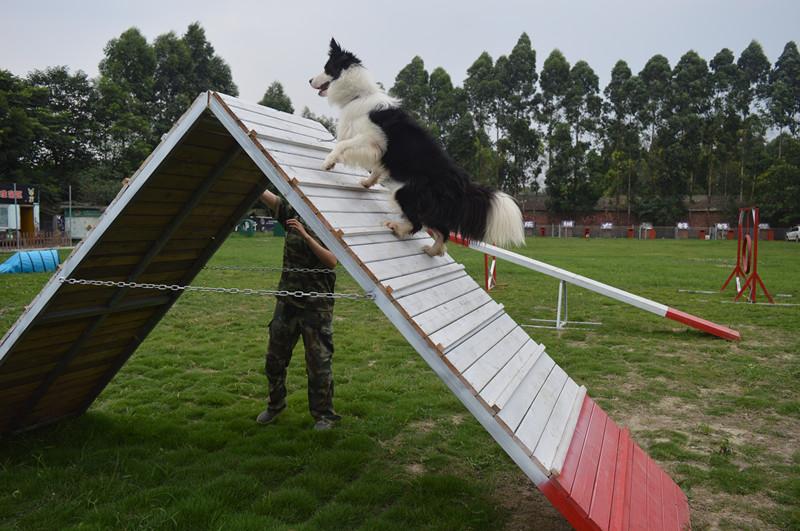 福州宠物训练服务价格