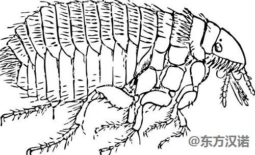 ??跍绨紫仯骸奔依镉刑樵趺崔k,7個方法教你快速徹底清除跳蚤